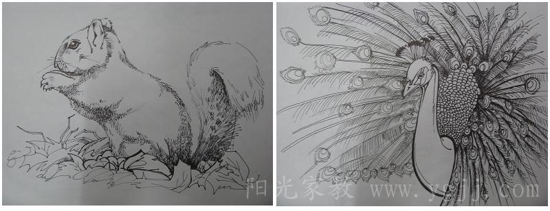 素描画动物松鼠